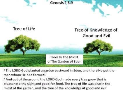 Evolution and the Historical Fall: What Does Genesis 3 Tell Us about the Origin of Evil?